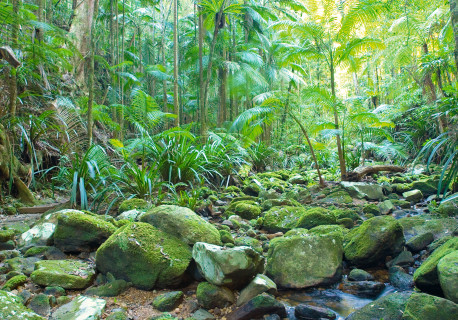 NRT_rainforest_21_med